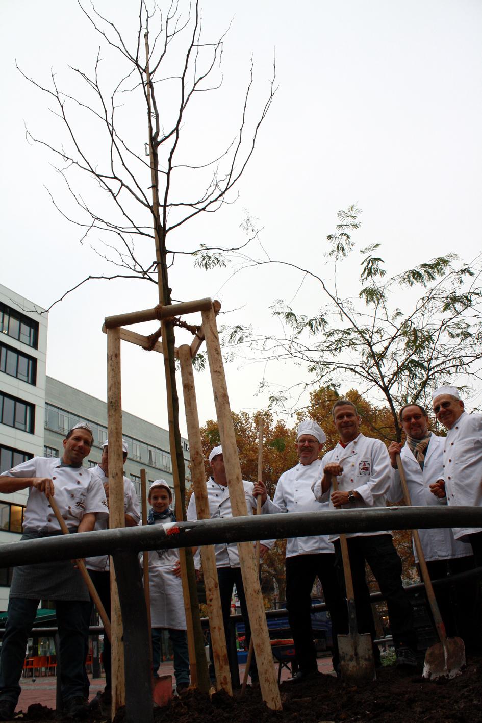 Der Bäcker-Baum ist bereits fünf Meter hoch.